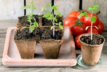 Посадка рассады в марте 2021 года для получения богатого урожая