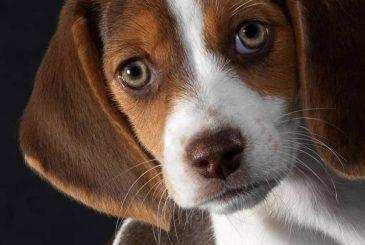 Заболел питомец: что делать при проблемах с печенью у собак