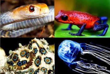 Самые ядовитые существа на Земле: кто убивает чуть ли не взглядом