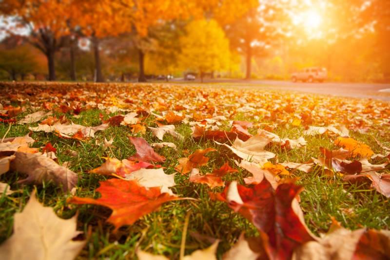 День шуршания листьями: дата празднования