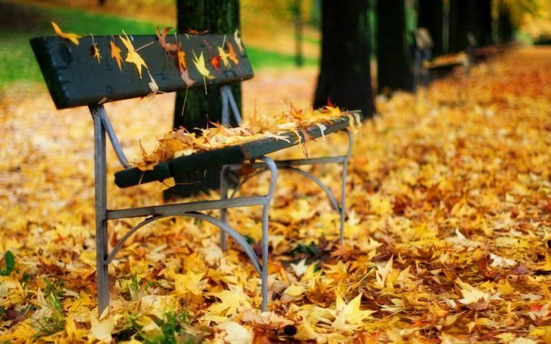 День шуршания листьями: как праздновать