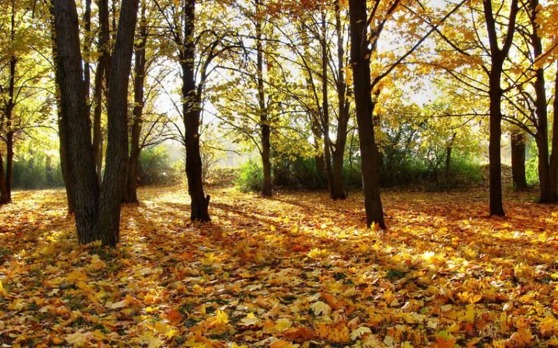 День шуршания листьями: стихи