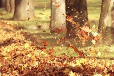 День собирания осенних листьев празднуют 15 октября