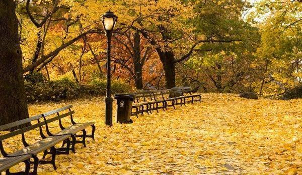 День вдыхания осеннего воздуха: как отметить