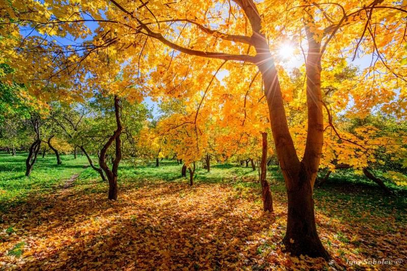 День вдыхания осеннего воздуха: прикольные и красивые стихи