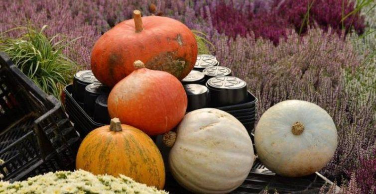 Осенний день равноденствия можно будет наблюдать 22 сентября 2021 года itemprop=