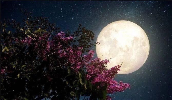 Что принесет розовая Луна и Суперлуние 27 апреля 2021 года itemprop=