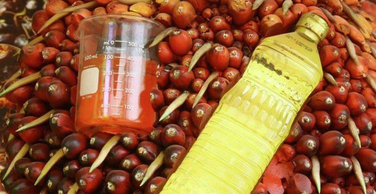 Как обозначается пальмовое масло в продуктах и как его определить самостоятельно itemprop=
