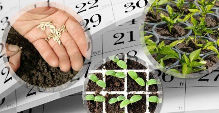 Что можно посадить на участке в августе 2021 года, благоприятные дни itemprop=
