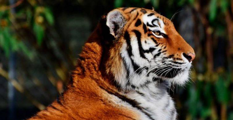 Какое животное станет покровителем 2022 года по восточному календарю itemprop=